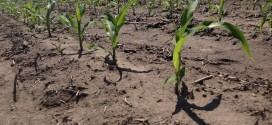 Soil Nutrient Availability May Constrain Crops from Capturing Carbon Dioxide, Recent Study Says