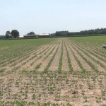 Virginia Beach Soybean Research Update