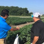 Different Soybean Genetics for Foliar Applications