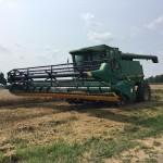 Wheat Harvest 01