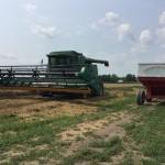 Wheat Harvest 02
