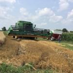 Wheat Harvest 03