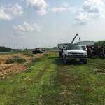 Wheat Harvest 05