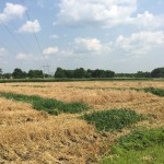Wheat Harvest 06