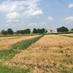 Wheat Harvest 07