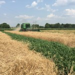 Wheat Harvest 08