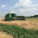 Wheat Harvest 09