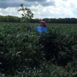 High Yielding Soybeans in Virginia Beach