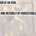 How to Estimate Corn Yield