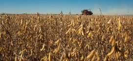 Soybean Variety Tests Show Surprisingly Good Yields
