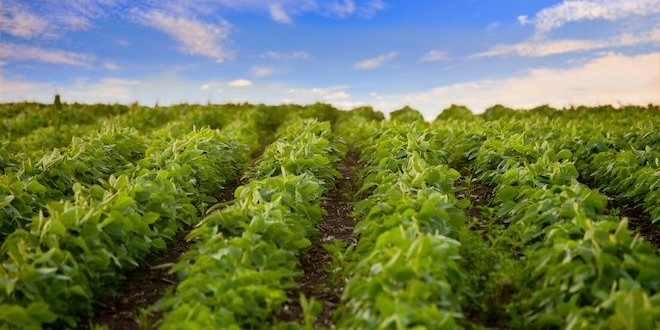 boost herbicide efficacy with nanoparticles
