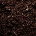 Beneficial Bacteria Support Soil Health