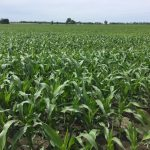 Bigger Yields Demand More Micronutrients