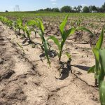 Brix Levels Indicate Crop Health