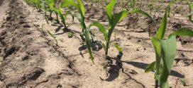 Brix Levels Indicate Crop Health