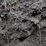 organic-matter-in-soil