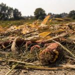 Manage Field Residues
