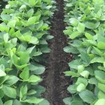 Micronutrient Soybean Yields