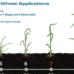 Wheat Application Timing