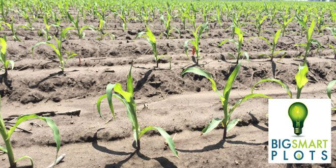 Last Call for BigSmartPlots Participation on Corn Acreage
