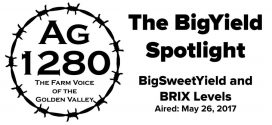 BigYield Spotlight - BigSweetYield and BRIX Levels