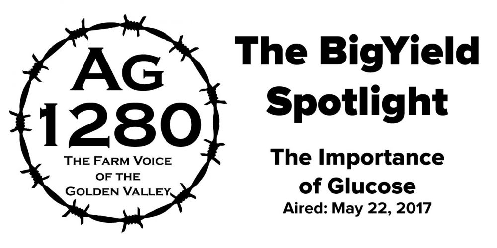 BigYield Spotlight - The Importance of Glucose