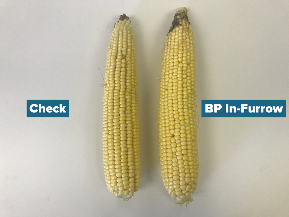 BP In-Furrow Ear Comparison