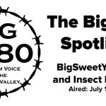 BigYield-Spotlight-BigSweetYield-DB-and-Insect-Pressure