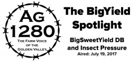 The BigYield Spotlight – BigSweetYield DB and Insect Pressure