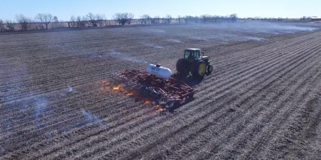 Burn in the Fall for Spring Weed Control