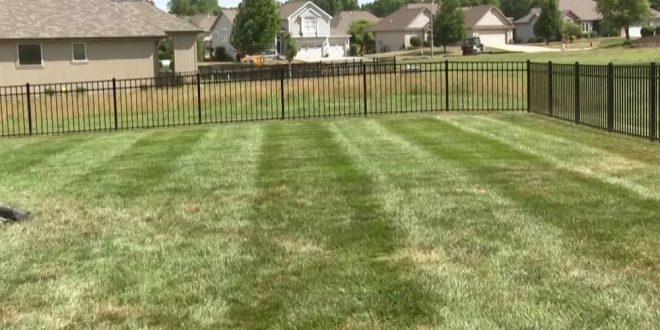 Use BigYield Products on Your Lawn