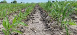 BP In-Furrow Corn Comparison Featured