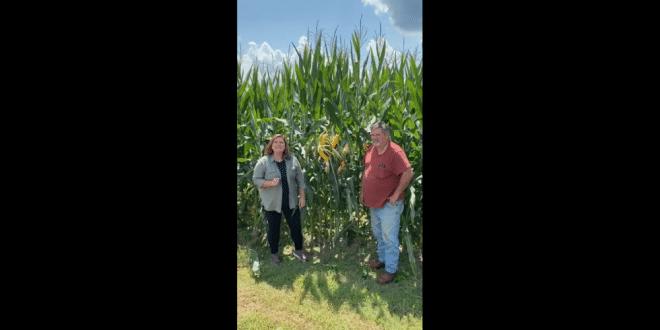 Dexter Jones Discusses His BigYield Corn Program