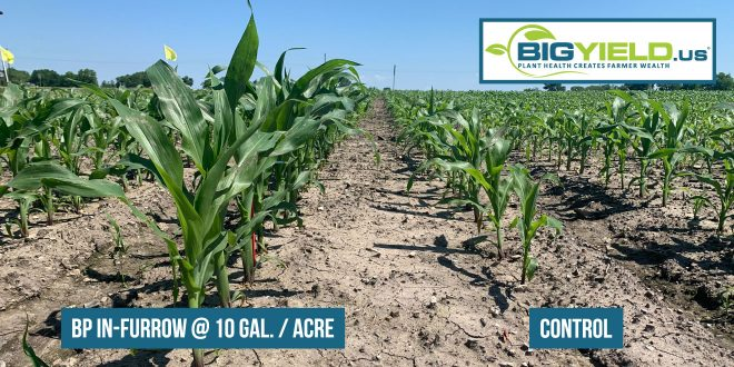 A Look at BP In-Furrow on Corn