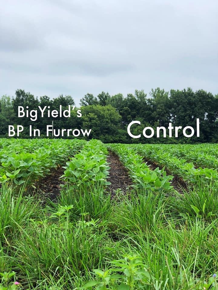 BP In-Furrow Soybean Comparison