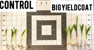 BigYieldCoat Corn 10 Day Comparison Featured