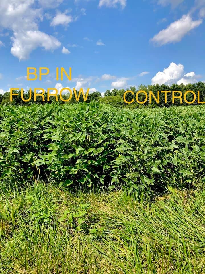 Update Photo BP In-Furrow Soybeans